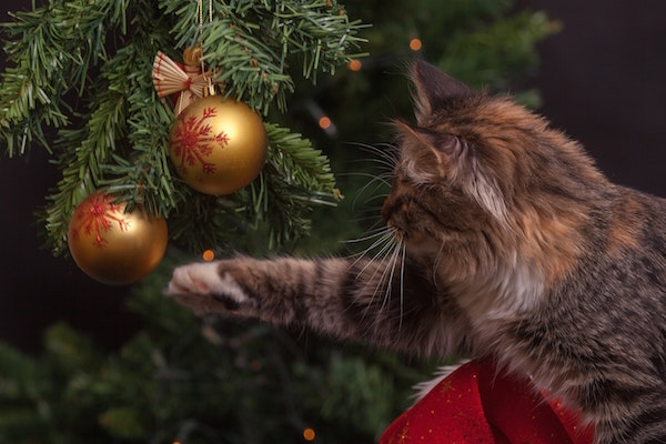 Cat batting Christmas tree ornament